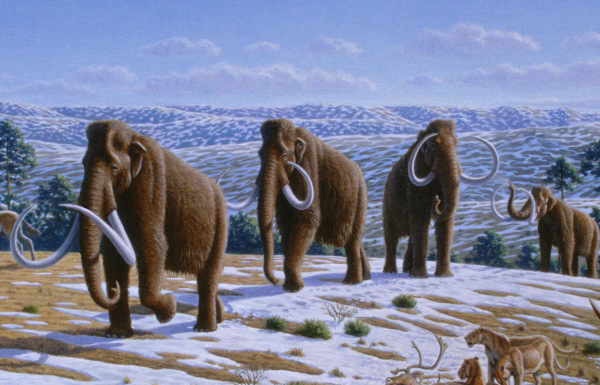 Prehistoric man only began raising crops in earnest once the wooly mammoths started dying out